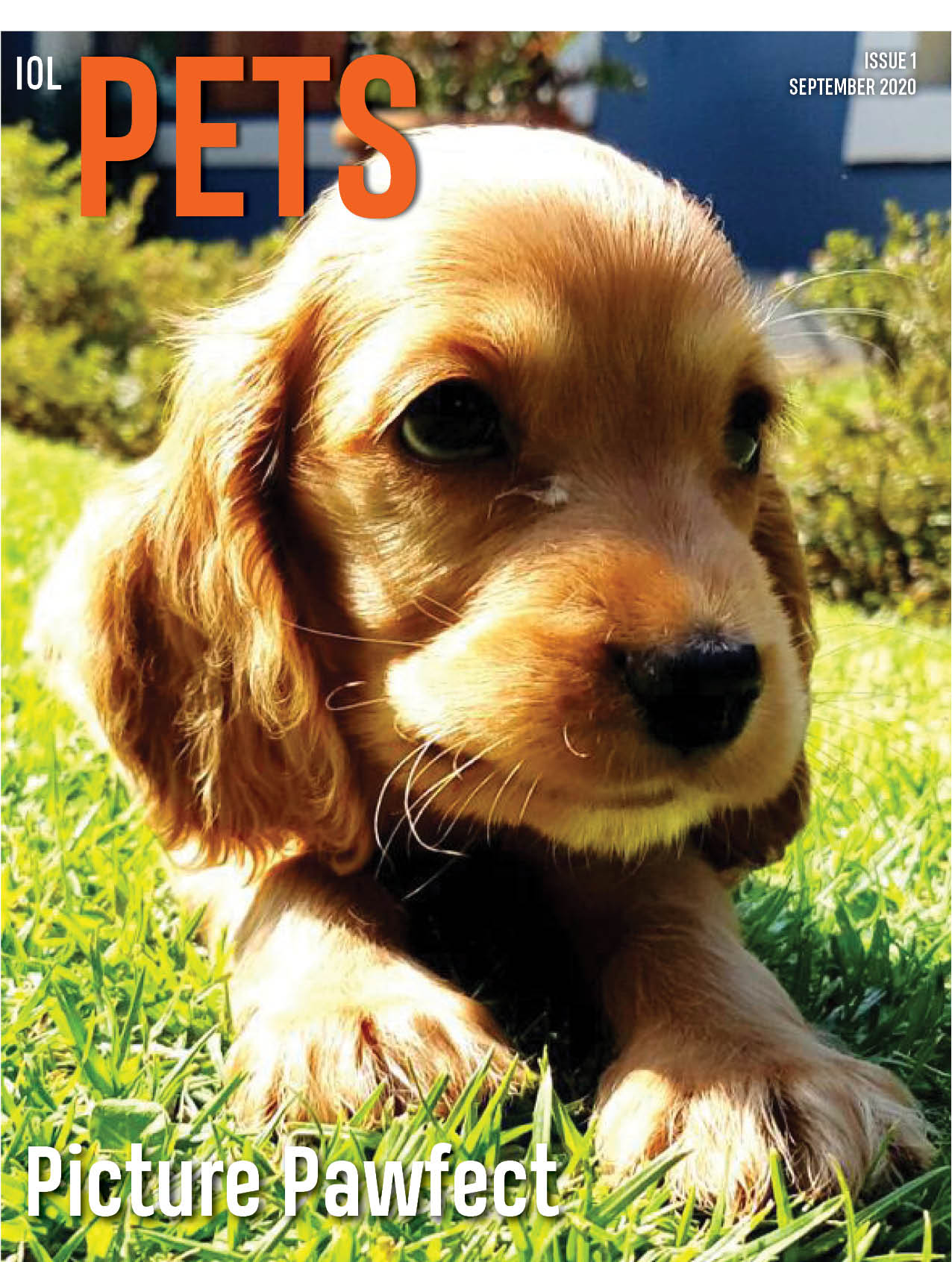 IOL Pets Issue 1
